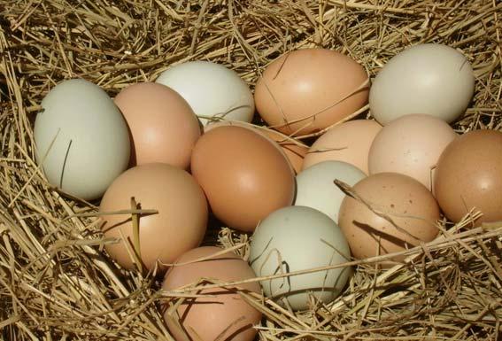 farm-eggs- Nattu Egg